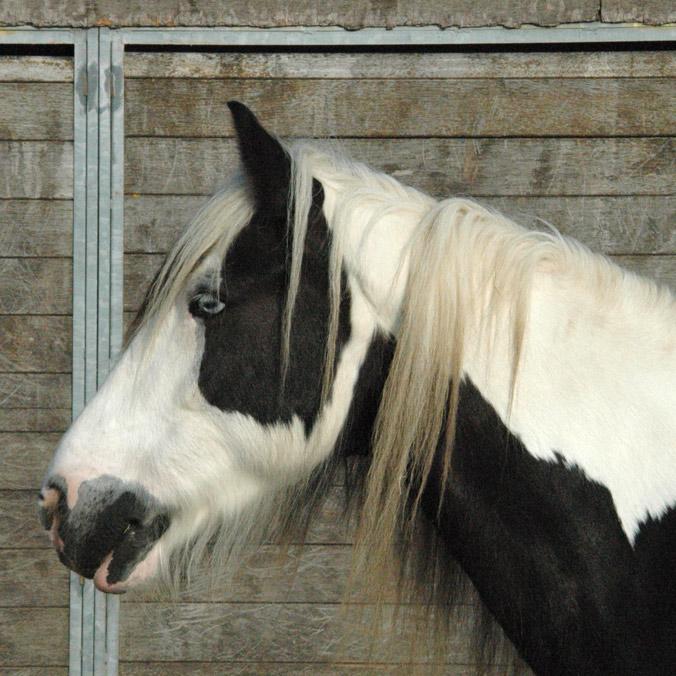 Teun Paard